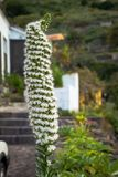 Una pianta esotica tropicale in Tenerife, Spagna Immagini Stock