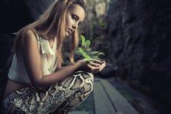 Una pianta in mani femminili Immagine Stock Libera da Diritti
