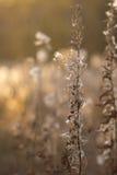 Una pianta quasi morta con luminoso dal fondo del fuoco Immagine Stock Libera da Diritti