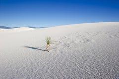 Una pianta sola nel deserto Immagine Stock