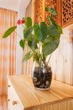 Una pianta su una tabella di legno in una stanza Fotografie Stock