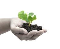 Una pianta in una mano Immagini Stock Libere da Diritti
