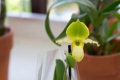 Una pianta unicamente a forma di Immagini Stock