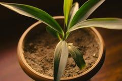 Una pianta in vaso da fiori immagine stock