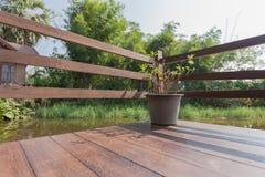 Una pianta in vaso il giorno soleggiato fotografie stock