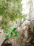 Una pianta verde vicino ad un lago Fotografia Stock Libera da Diritti