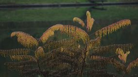 Una pianta vicino al lago archivi video
