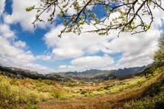Una piantagione della prugna in primavera in anticipo Fotografie Stock Libere da Diritti