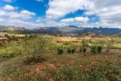 Una piantagione della prugna in primavera in anticipo Immagini Stock Libere da Diritti