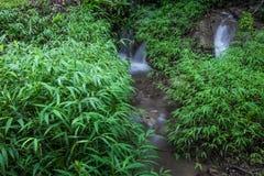 Una piccola cascata nella foresta in pieno degli alberi verdi fotografia stock