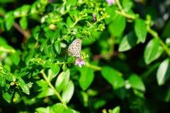 Una piccola farfalla Fotografia Stock Libera da Diritti