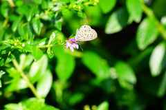 Una piccola farfalla Immagini Stock