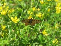 Una piccola farfalla si è appollaiata su un fiore nel campo Immagini Stock