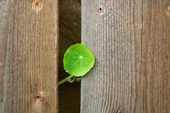 Una piccola foglia verde sui precedenti di una struttura marrone Fotografia Stock