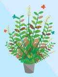 Una piccola grande pianta dell'albero Immagine Stock Libera da Diritti