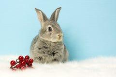 Una piccola lepre grigia che si siede vicino ad una bacca rossa Fotografia Stock Libera da Diritti