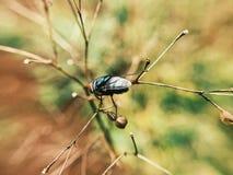 Una piccola mosca Fotografia Stock