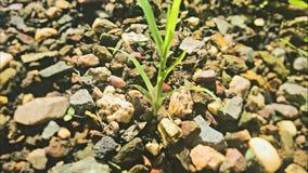 Una piccola pianta… più grande Immagini Stock