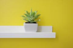 Una piccola pianta verde su uno scaffale bianco, parete gialla Fotografia Stock