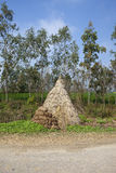 Pila del fieno nel Punjab Immagini Stock