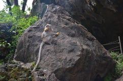 Una piccola scimmia marrone si siede su una grande pietra circondata da pianta, tiene una banana nelle sue zampe e bocca e distog immagini stock