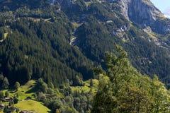 Una piccola valle verde nascosta nella foresta Immagine Stock