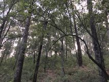 Una piccola vista in una foresta Fotografie Stock