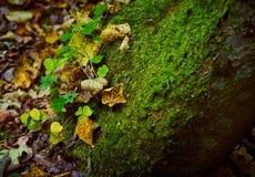 Una piedra cubierta con el musgo y la hierba en el bosque del otoño Imagen de archivo libre de regalías