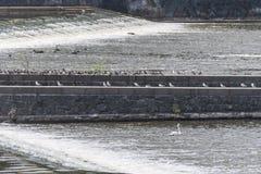 Una piedra y un ladrillo aumentaron la plataforma con una fila de los pájaros que se sentaban sobre ella Imágenes de archivo libres de regalías