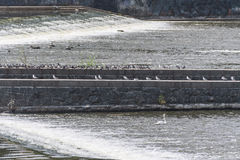 Una pietra e un mattone hanno sollevato la piattaforma con una fila degli uccelli che si siedono sopra  Immagini Stock Libere da Diritti
