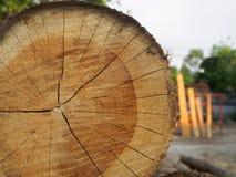 Una pila de árboles cortados de la teca en el bosque para un fondo Fotos de archivo