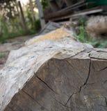 Una pila de árboles cortados de la teca en el bosque para un fondo Foto de archivo libre de regalías