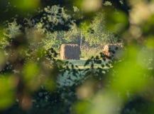 Una pila de heno Visión a través del follaje Imagen de archivo