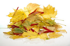 Una pila de hojas de otoño imágenes de archivo libres de regalías