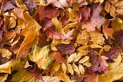 Una pila de hojas secas. Fotografía de archivo libre de regalías