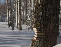 Una pila de libros como parte de un tronco de árbol, expuesta después de derribar en el bosque del invierno Fotos de archivo libres de regalías