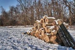 Una pila de madera cortada en invierno en un bosque Foto de archivo