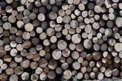 Una pila de madera cortada en un bosque Fotografía de archivo libre de regalías