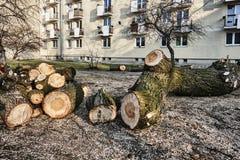 Una pila de madera cortada en una ciudad Foto de archivo