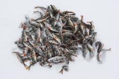 Pescados en la nieve Imágenes de archivo libres de regalías