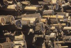 Una pila de registros marcó con etiqueta para procesar en un molino de la madera de construcción en Willits, California Imágenes de archivo libres de regalías