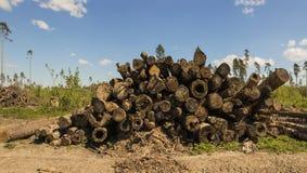 Una pila de registros preparados y almacenados en bulto La textura cortada es la madera agrietada Cierre para arriba imagen de archivo libre de regalías