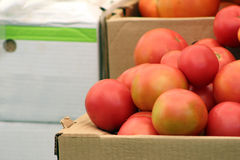 Una pila de tomates Fotos de archivo libres de regalías