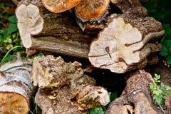 Una pila de troncos de árbol en la madera Fotos de archivo libres de regalías