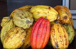 Una pila de vainas del cacao Fotografía de archivo