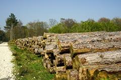Una pila di alberi tagliati di recente in un campo aperto fotografia stock libera da diritti