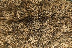 Una pila di legame di legno modella insieme Fotografia Stock