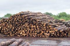 Una pila enorme de registros del bosque, una serrería, madera para la exportación, registro foto de archivo