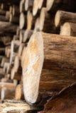 Una pila industriale di tronchi di albero immagini stock