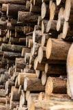 Una pila industriale di tronchi di albero fotografia stock